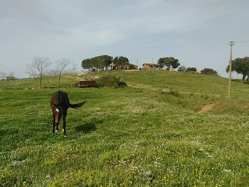 Col di Bacche Magliano in Toscana