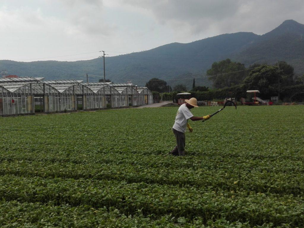 Anfossi azienda agraria Bastia Albenga (5)