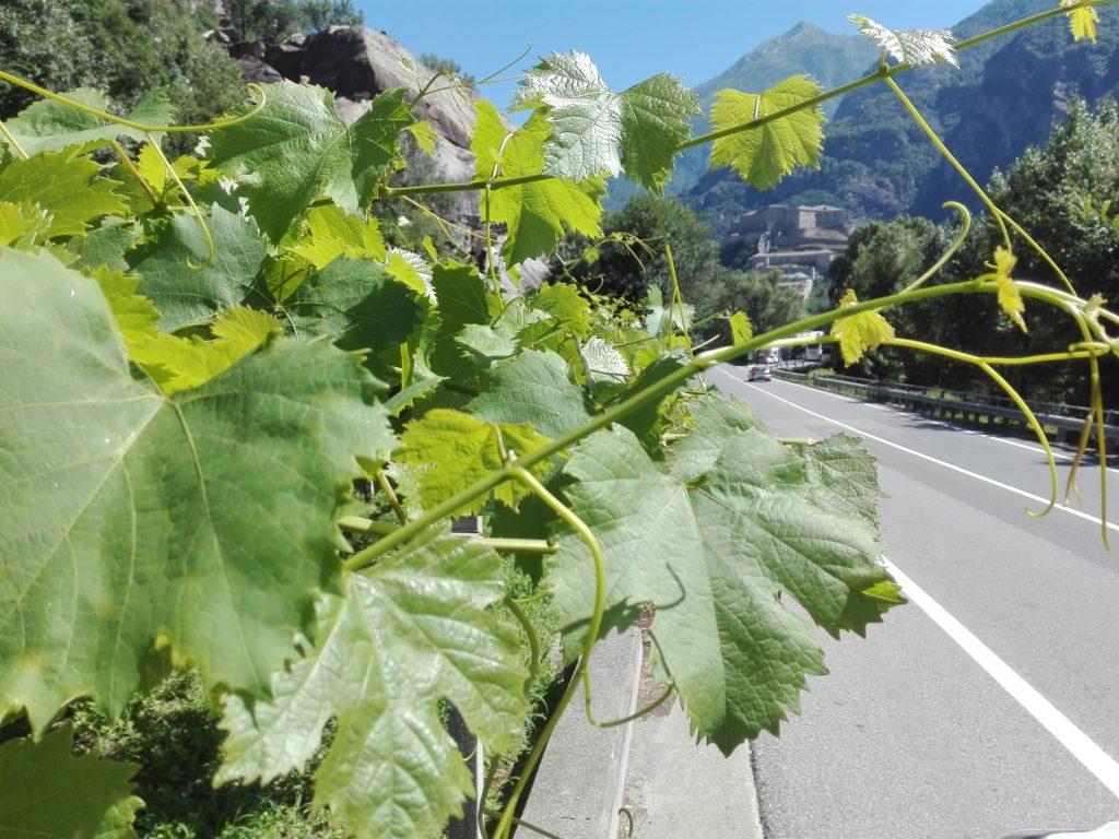 Cooperativa La Kiuva vino Arnad Valle d'Aosta (2)
