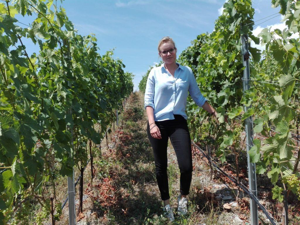 Svizzera wine tour swiss vino Valais Vaud Geneve cantine Vallese Ginevra visita (111)