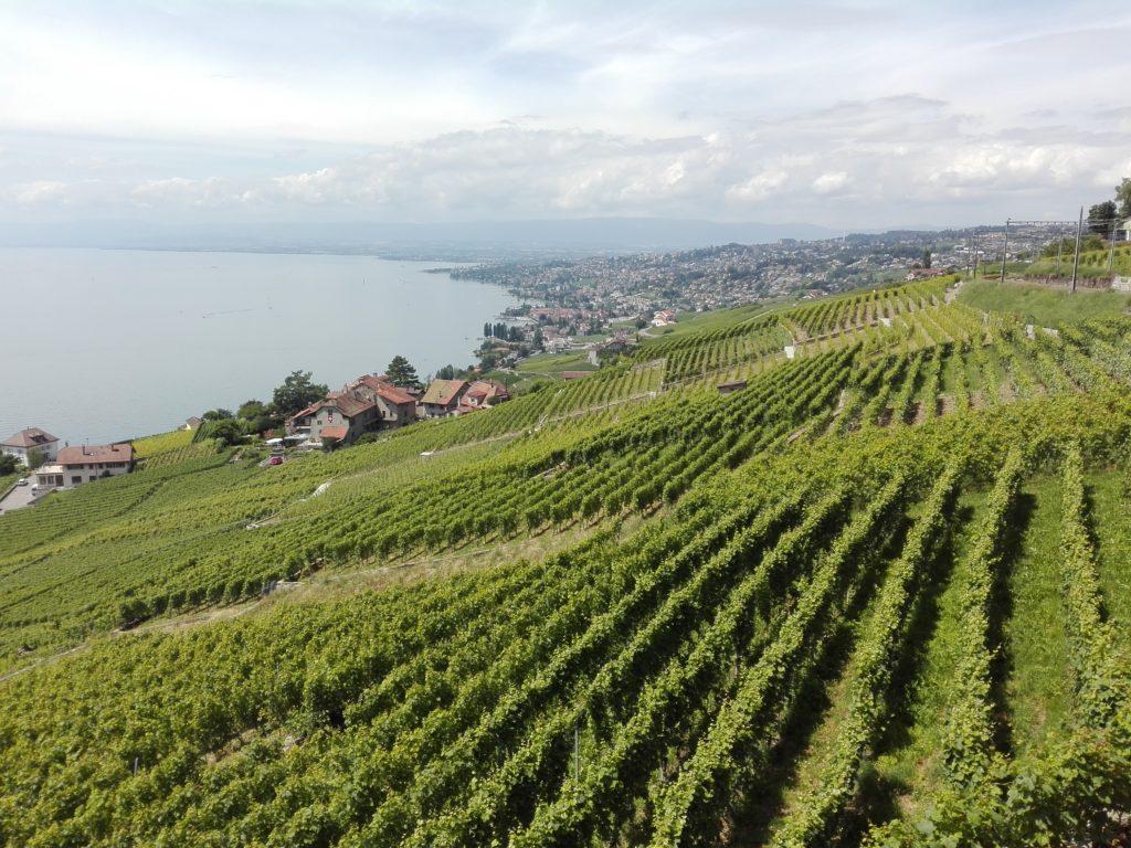 Svizzera wine tour swiss vino Valais Vaud Geneve cantine Vallese Ginevra visita (141)