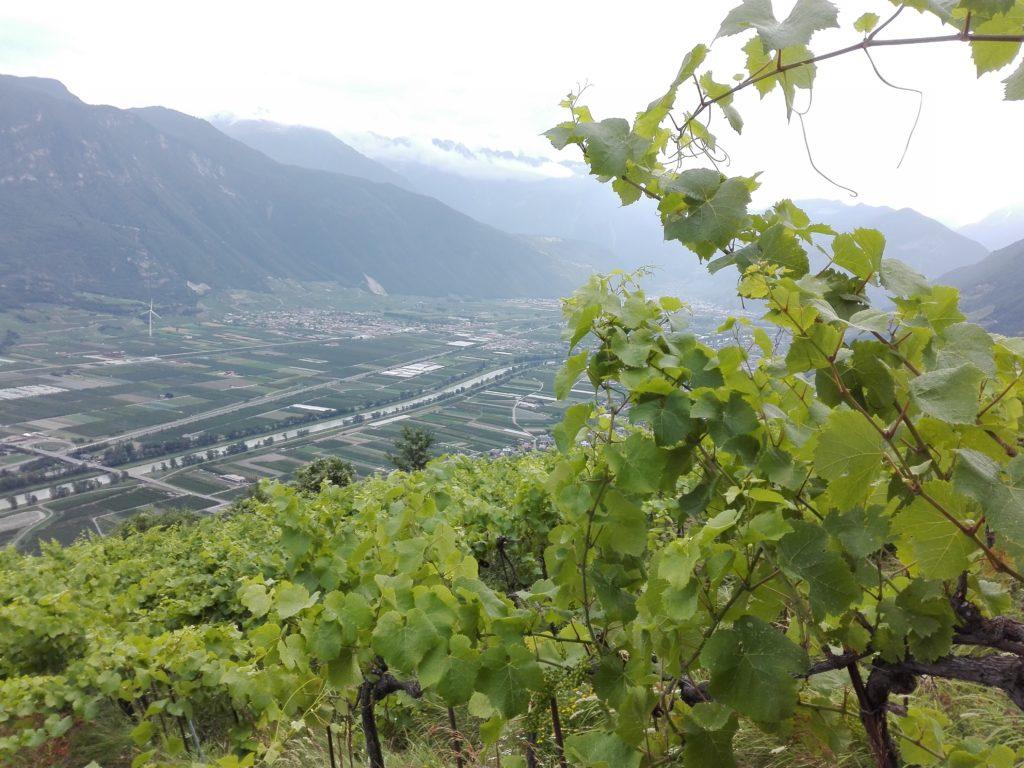 Svizzera wine tour swiss vino Valais Vaud Geneve cantine Vallese Ginevra visita (79)