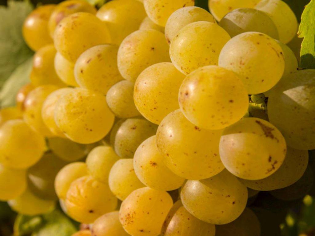 """Cos'è un """"vino naturale""""? """"Una dicitura ingannevole per il consumatore"""", dice l'Ue"""