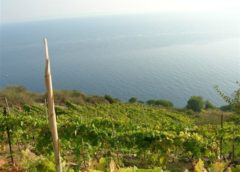 Viticoltura eroica: Manifesto del Cervim per vignaioli estremi e biodiversità