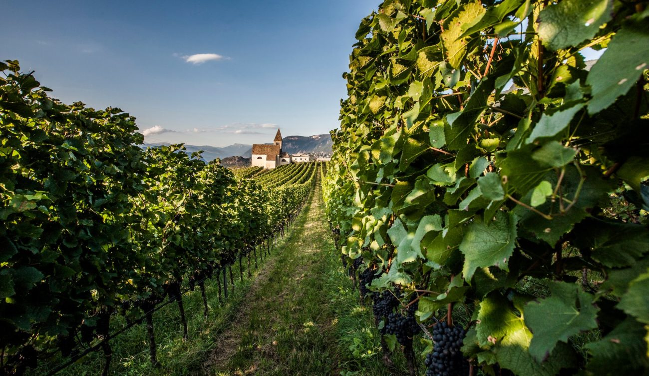 Confermata la 23° edizione delle Giornate Altoatesine del Pinot Nero