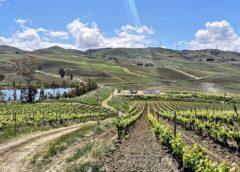 Terre Sicane e Monreale: il nuovo Eldorado della viticoltura (e dell'enoturismo) in Sicilia