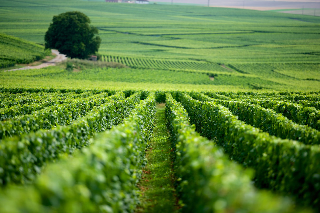 Viticoltura italiana sempre più green grazie ai giovani