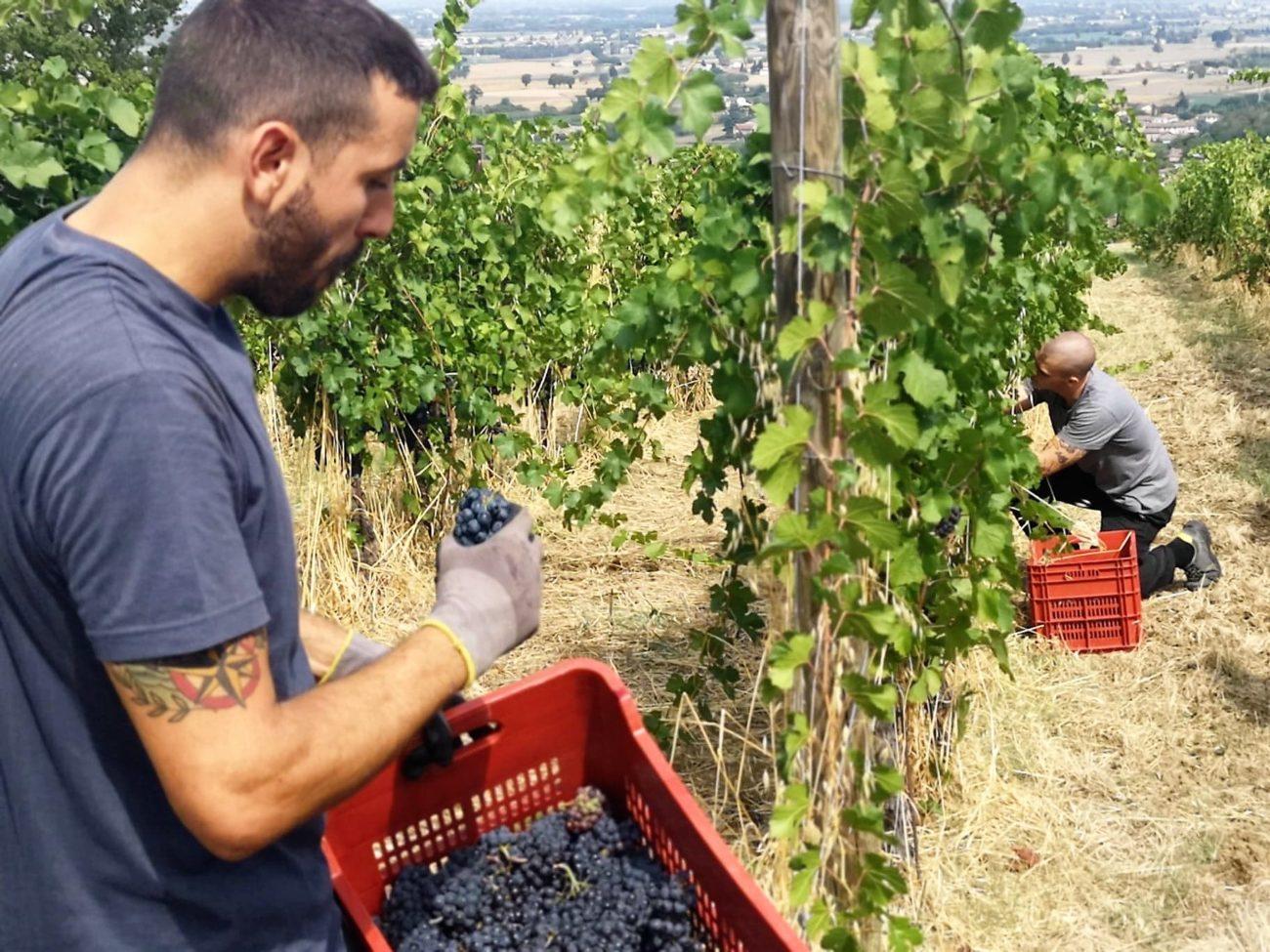 Ristoranti chiusi ed export a picco: viticoltura lombardia in difficoltà a metà 2020