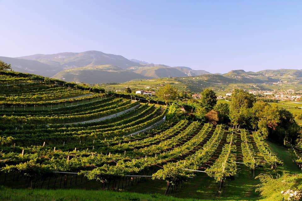 La Valpolicella reagisce a Covid-19: meno vino e nessuna nuova vigna