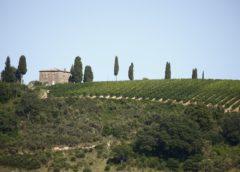 Montalcino: in cantina il Brunello rende più dei bond