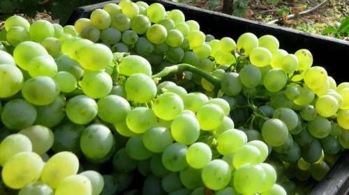 Sì alle bevande a base di vino, no all'acqua nelle Dop: le Cooperative sfidano l'Ue
