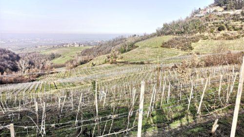 Distretto EnoAgroalimentare pavese: l'Oltrepò tenta il rilancio in quattro mosse
