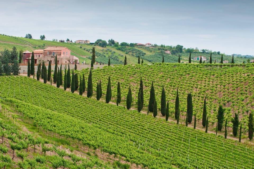 In vacanza in Abruzzo tra vino e relax: sei cantine che offr