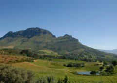 Sudafrica, divieto vendita e consumo vino: i produttori portano il Governo in Tribunale