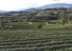 Schenk Italian Wineries a gonfie vele «grazie alla diversificazione di canale»