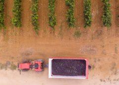 Esercito in vigna in Puglia contro la mafia del vino e dell'uva