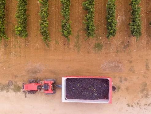 Esercito in vigna in Puglia, contro la mafia del vino e dell'uva