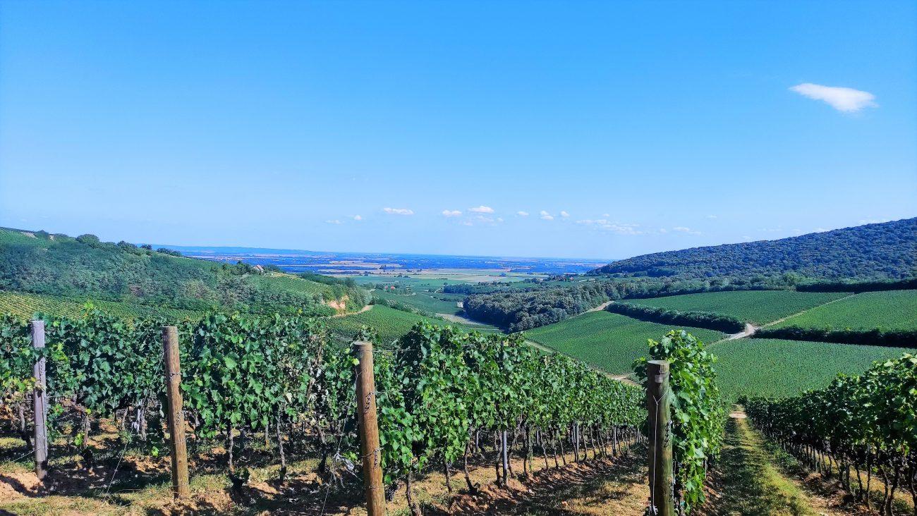 """Villány, Baranja ed Erdut: la """"Terra del vino"""" che unisce Ungheria e Croazia"""