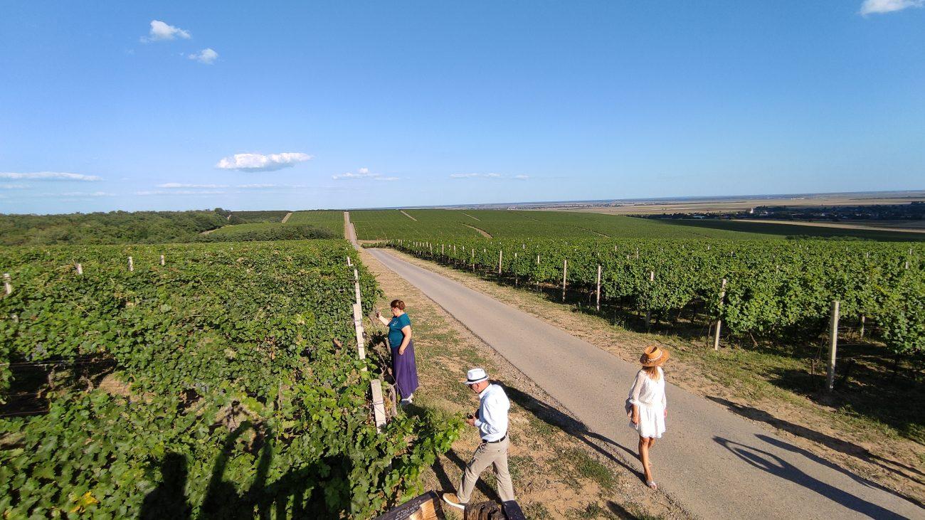 i vigneti della regione vinicola di Baranja, in Croazia