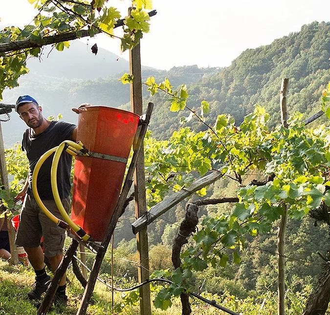 Agricola Mos, Miglior cantina Nord Italia 2022 Winemag.it il Trentino del futuro