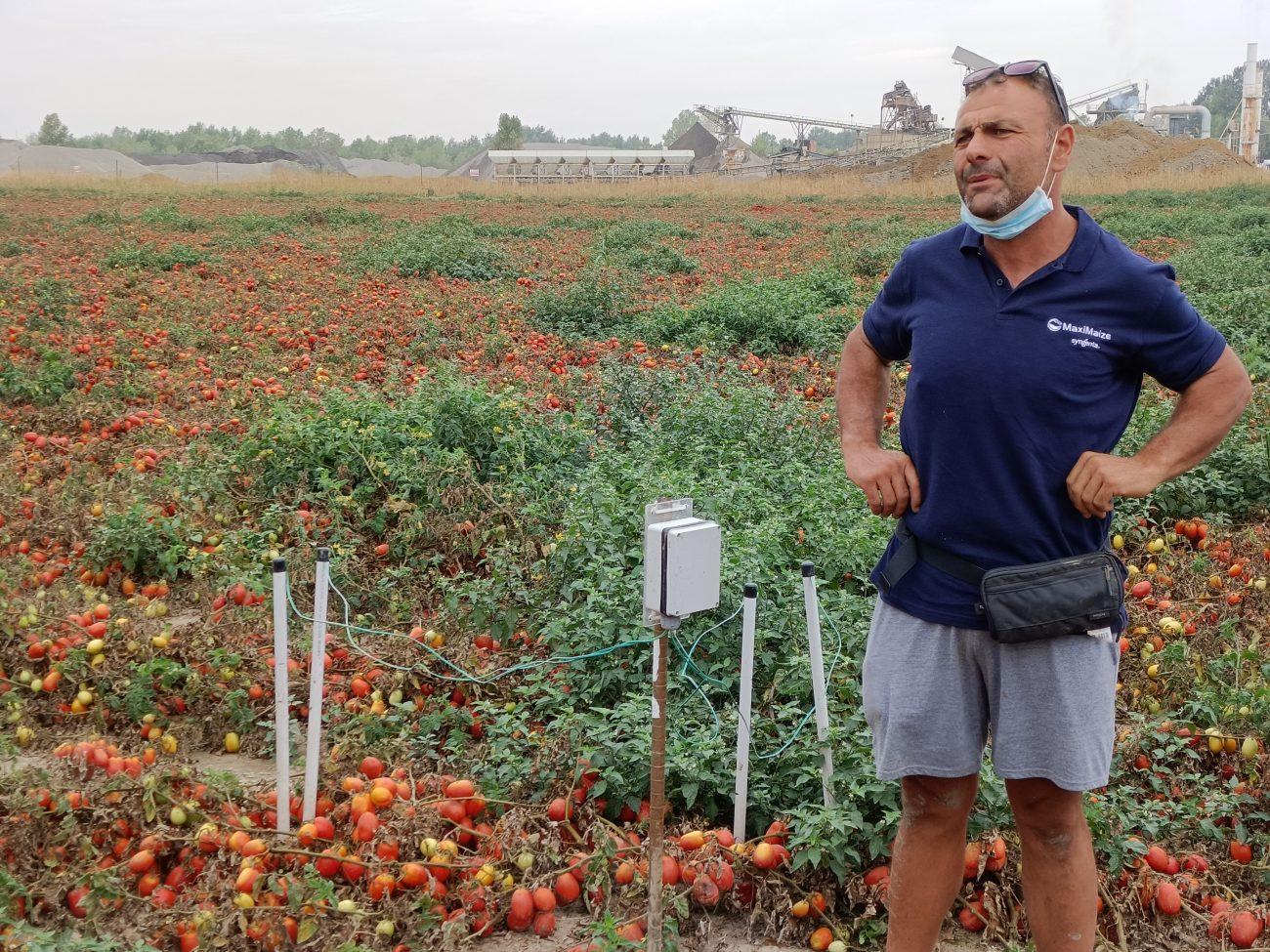 Sostenibilità -40% di acqua per irrigazione dei pomodori grazie alla tecnologia