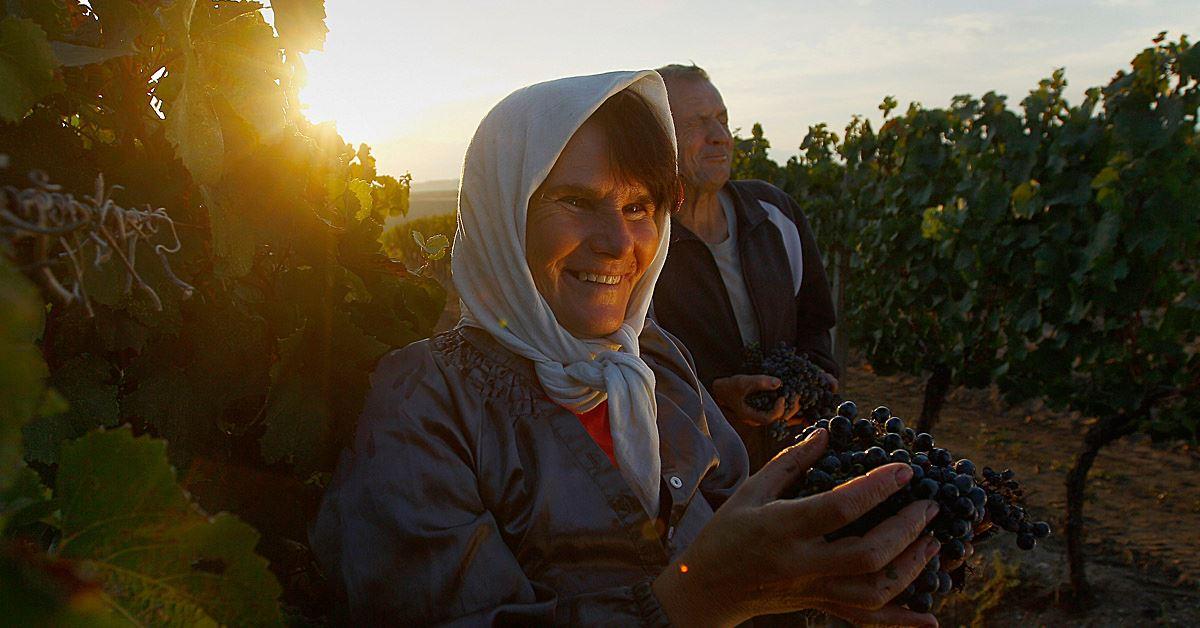 Vranec Vranac World Day 2021 sfide e prospettive per il vino rosso simbolo dei Balcani