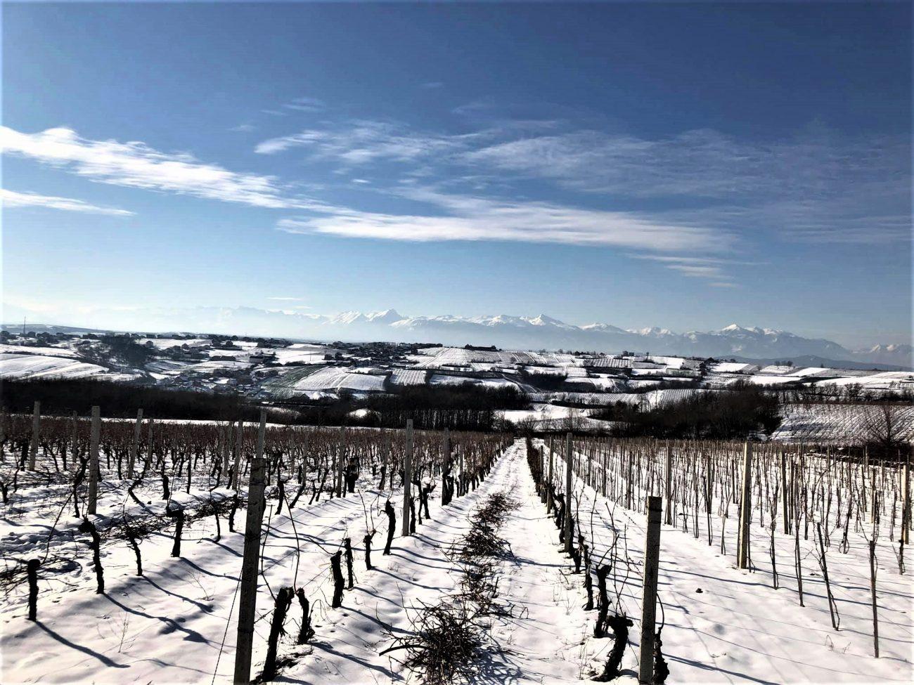 Vranec Vranac World Day 2021 sfide e prospettive per il vino rosso simbolo dei Balcani kosovo labi wine